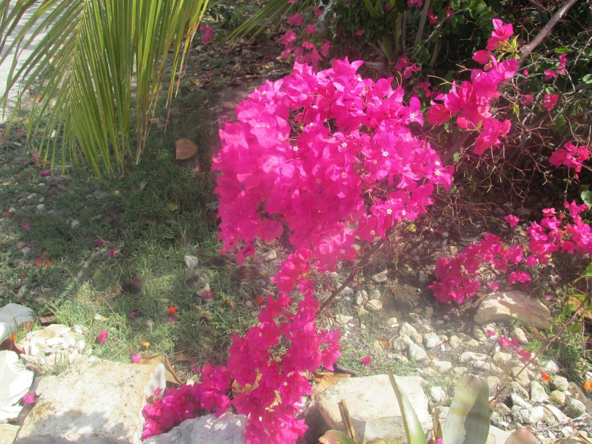 I have time to see the flowers in Antigua
