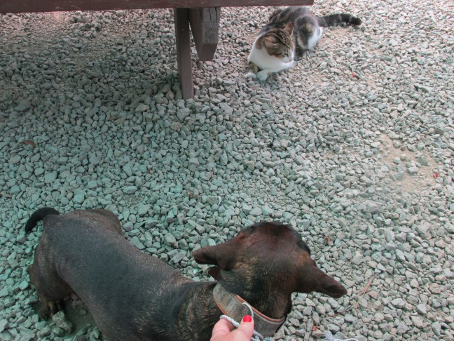 Dog looking at cat