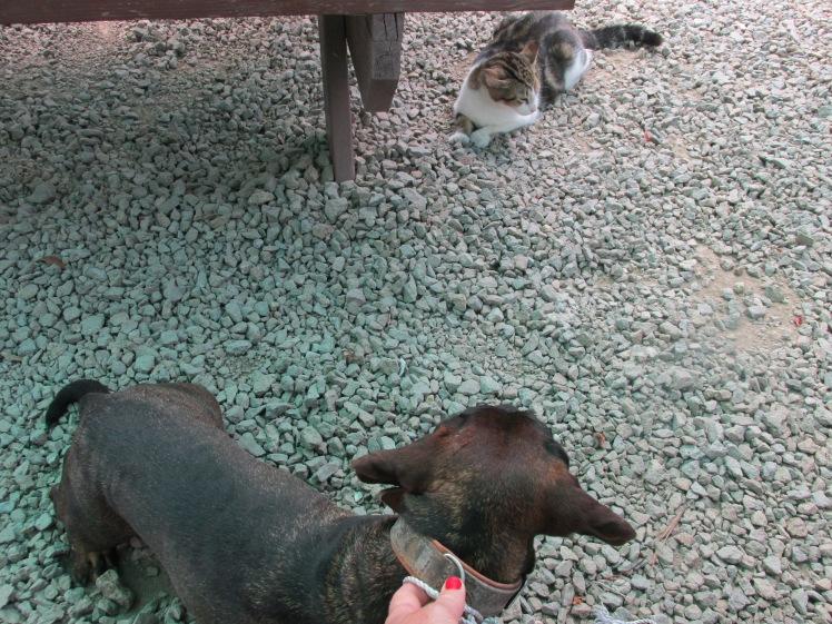 Dog looking at cat
