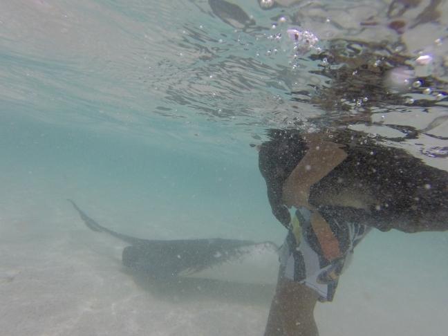Short doggy legs swimming