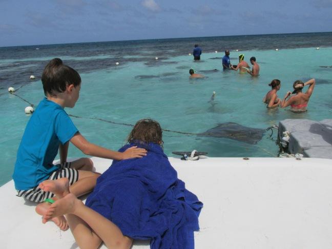 Stingrays on the reef