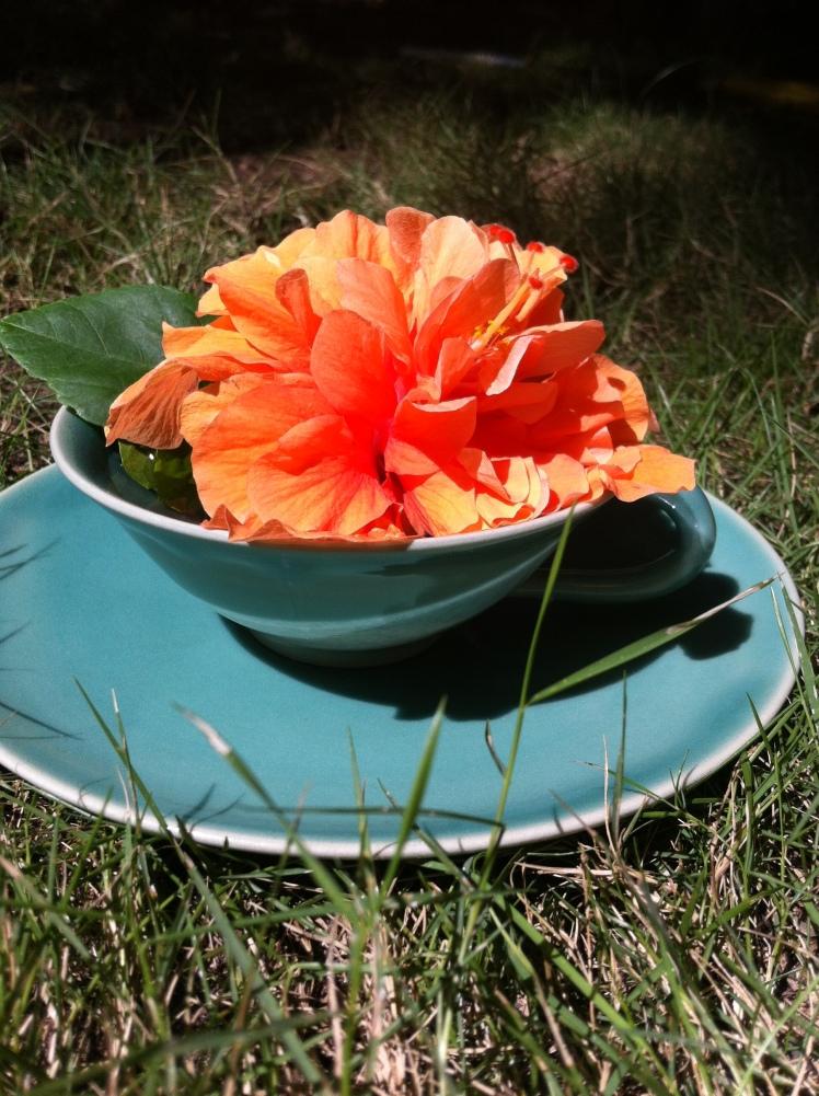 Flower in a Teacup