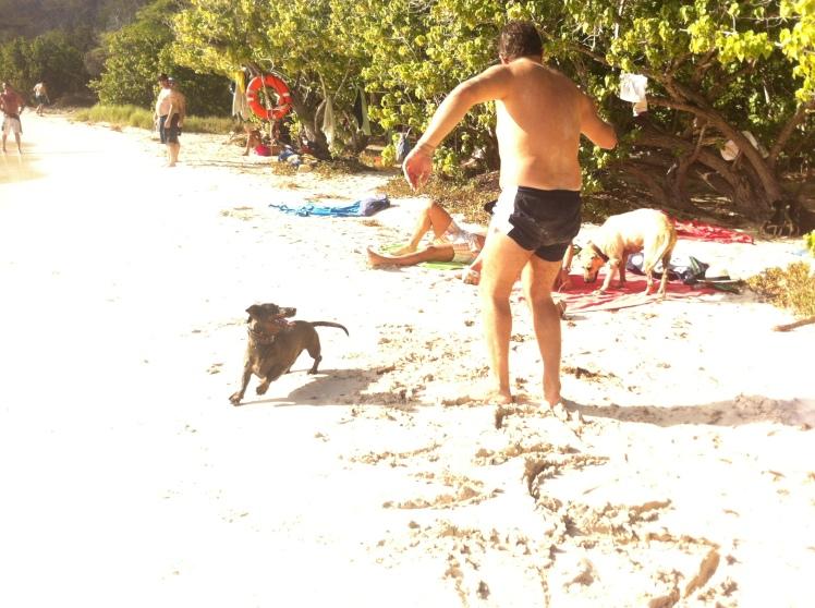 Surf Dog Ricky